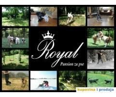 Pansion ROYAL za kucne ljubimce - Beograd