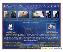 Dogo Argentino štenad na prodaju