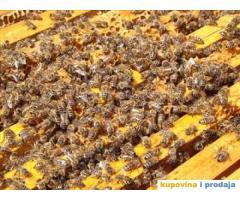 Jaka pčelinja drustva