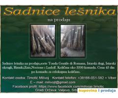 Sadnice Lešnika na prodaju