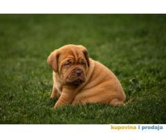 Stenci BORDOSKE DOGE