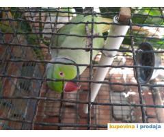 Prodjem papagaja