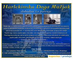 Harlekinska Doga