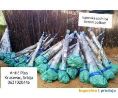 Sadnice lesnika, sljive, tresnje i visnje po ceni od 120din